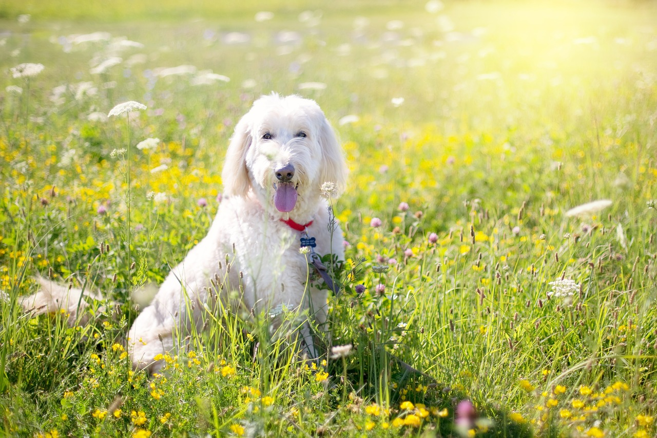 Does Your Dog Need A Summer Haircut Face Foundation