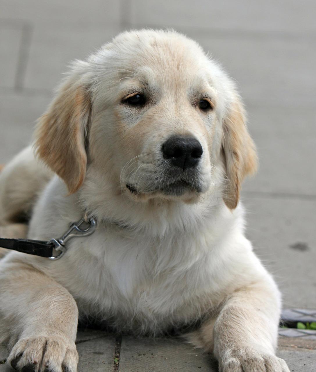 New puppy1