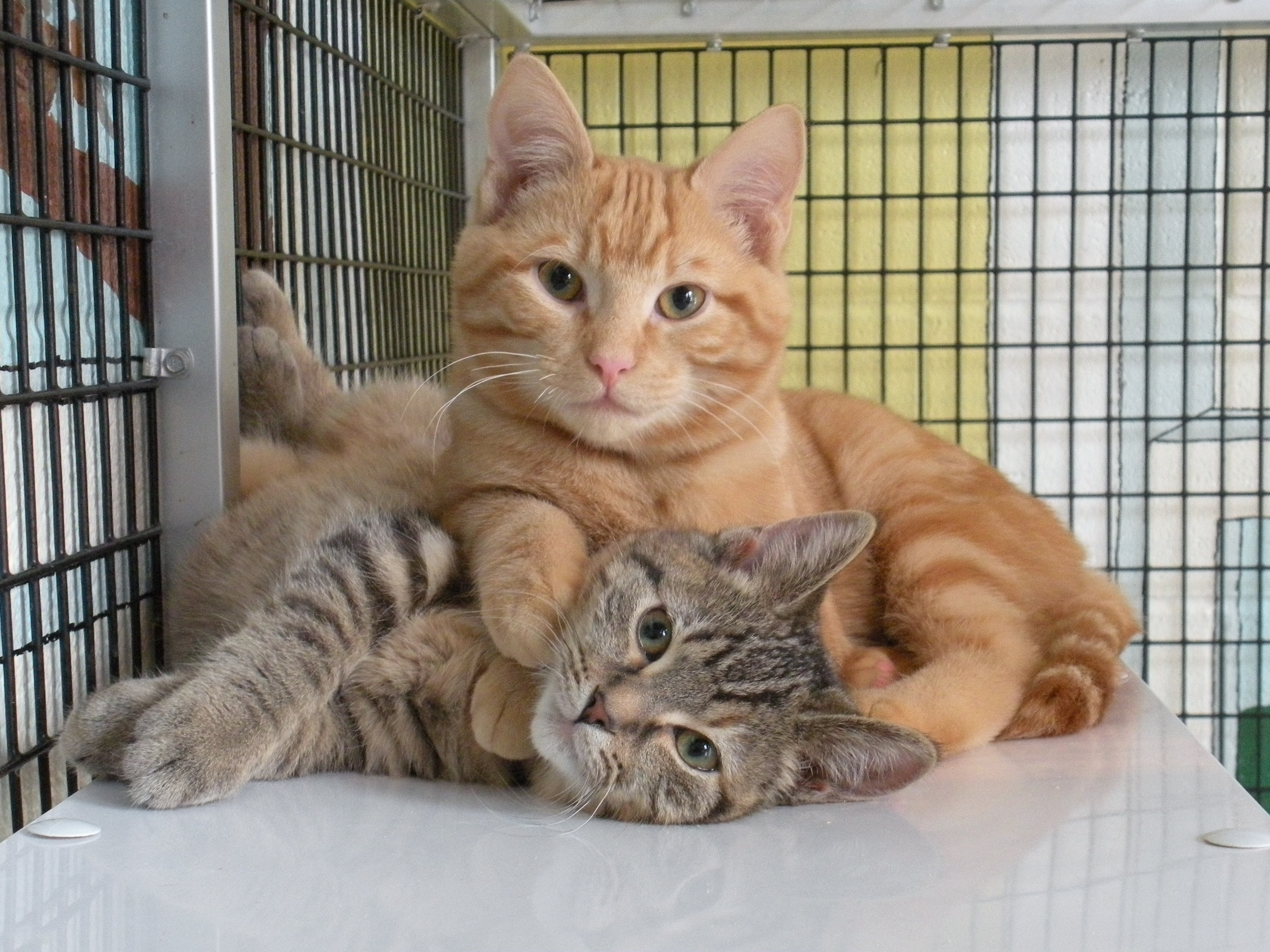 Shelter cat3