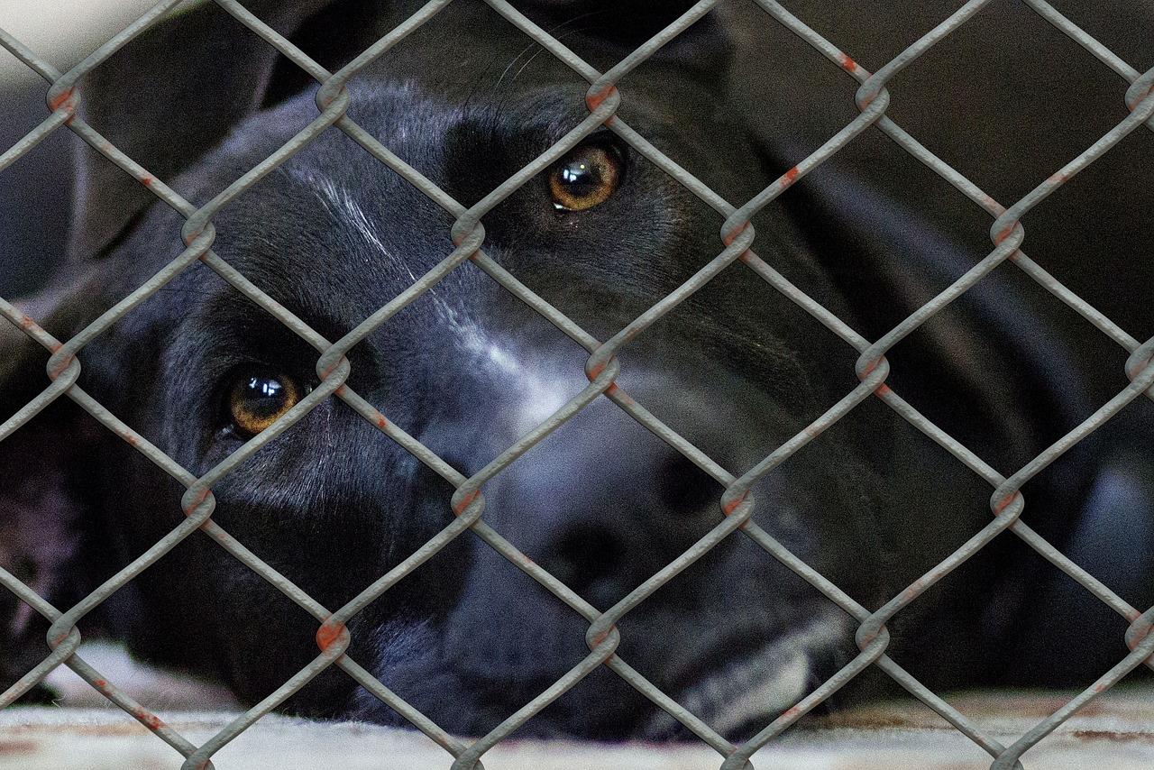 Shelter_dog cage