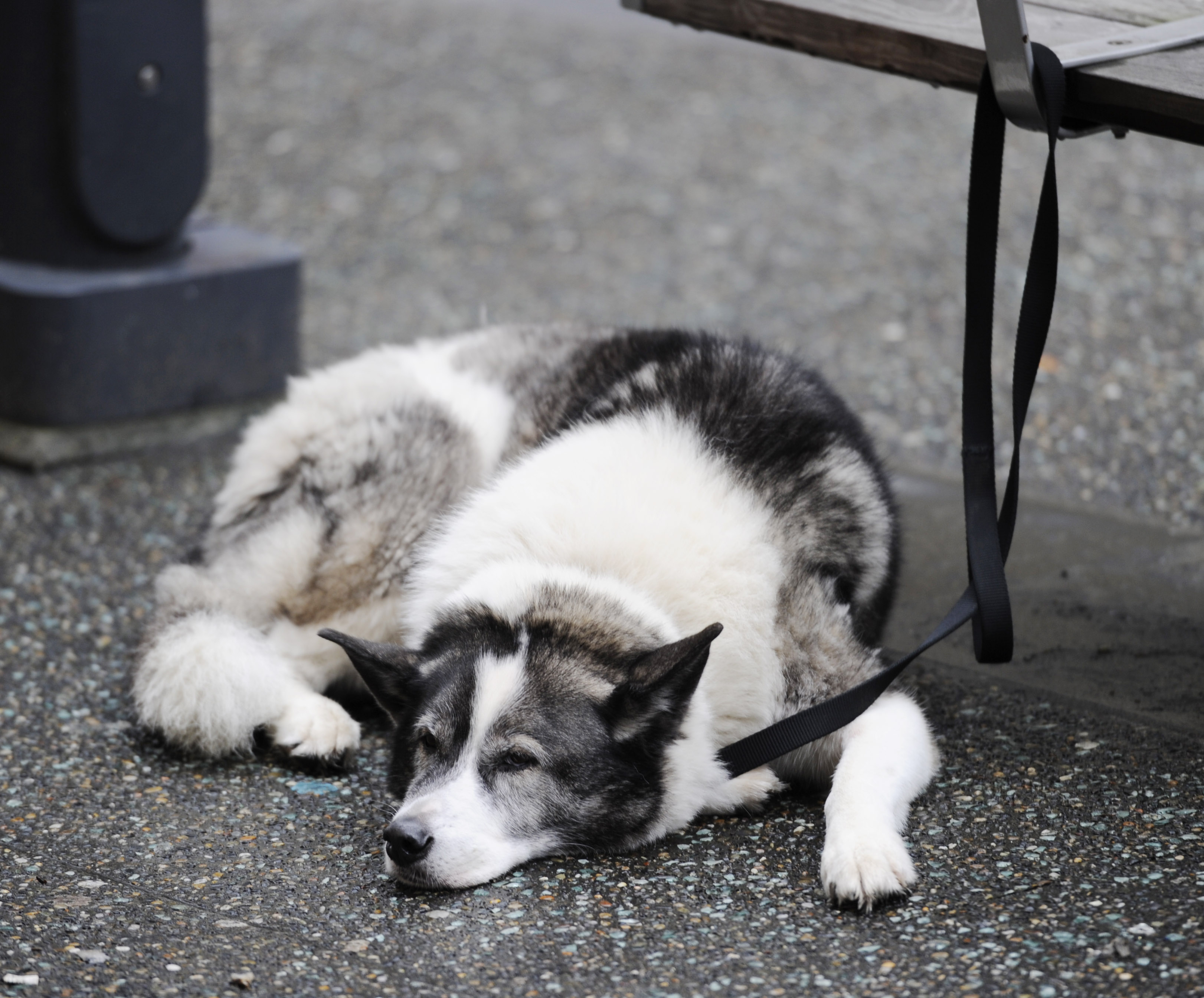 Why You Should Stop Leaving Your Dog Tied Up Outside of Shops - FACE Foundation