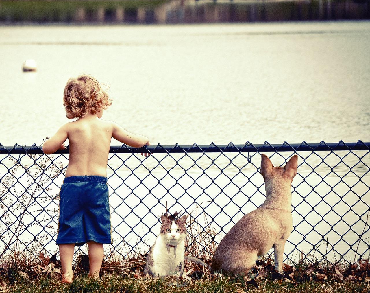 Child pet3
