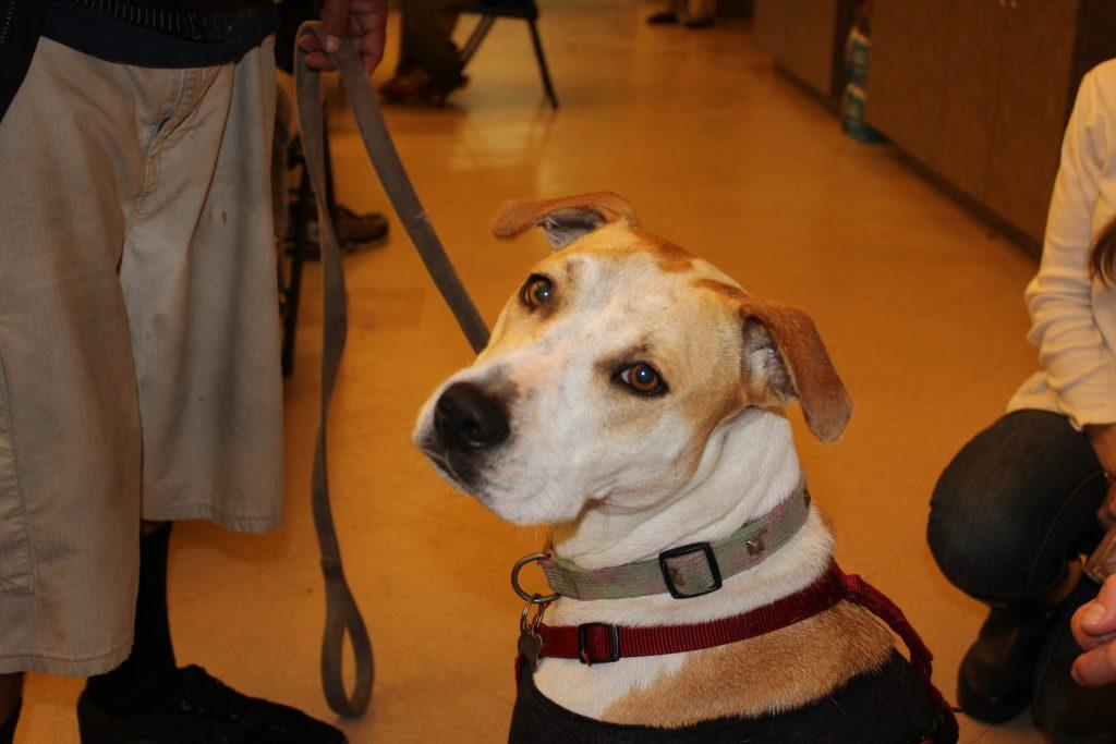 animal charity organizations