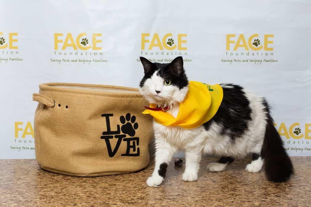local animal charities