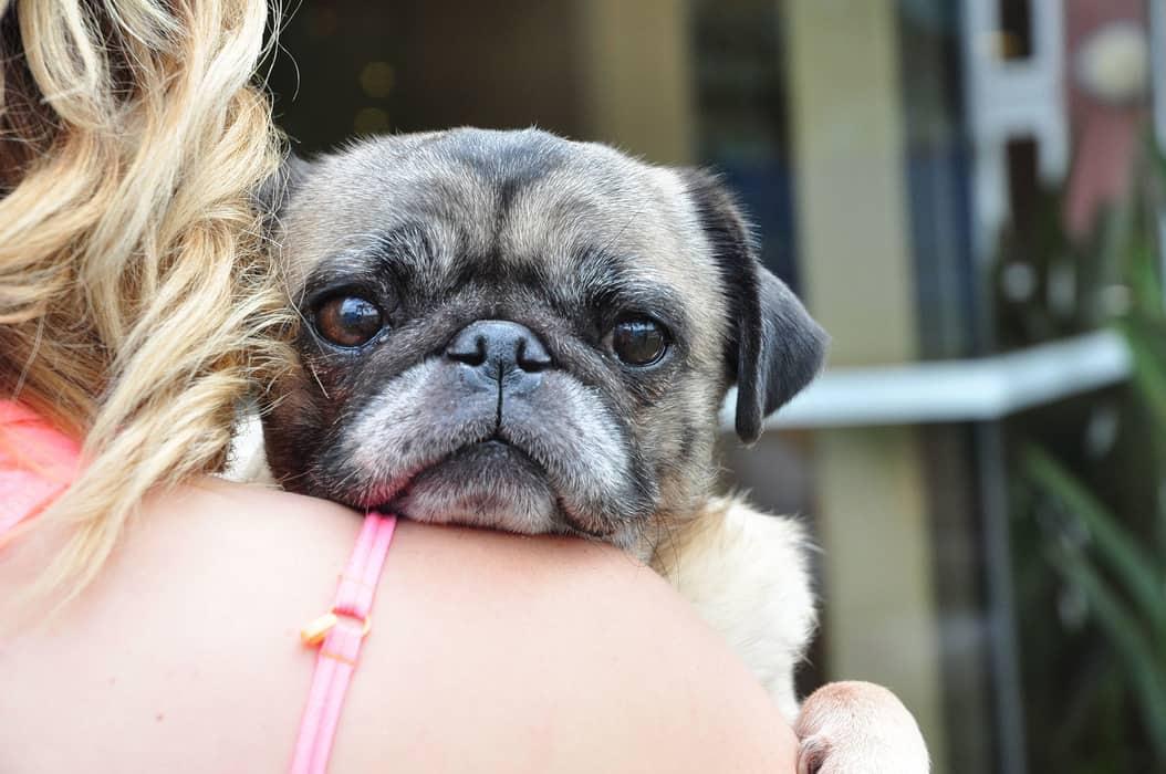 donate to animal charity