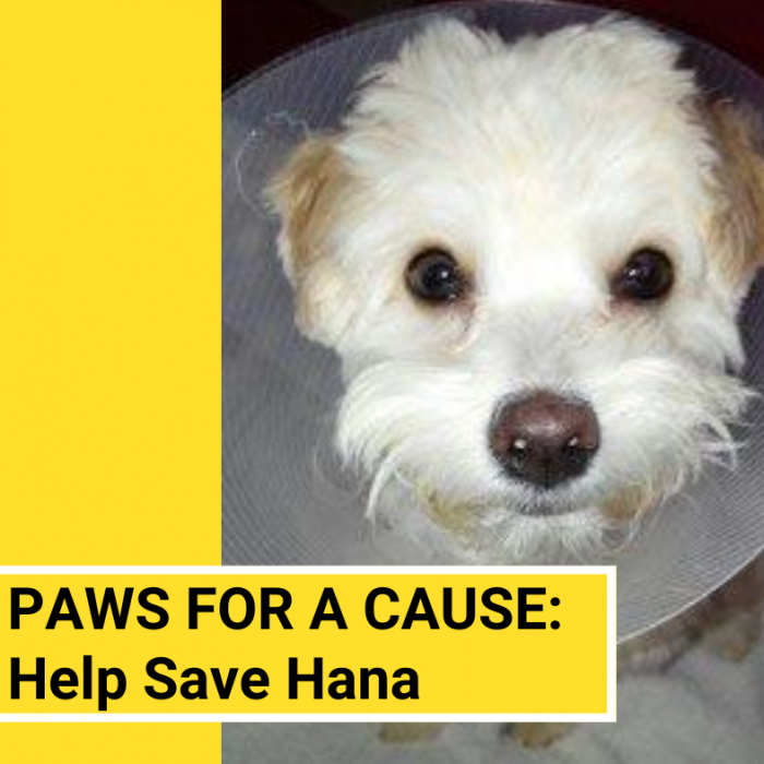 Paws for a Cause Appeal