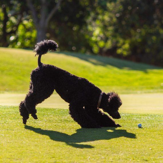 FACE golf tournament