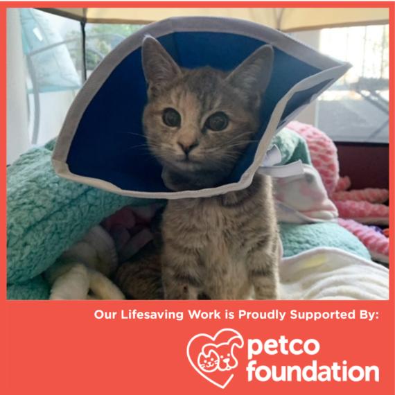 Petco Foundation Awards Life-Saving Grant!