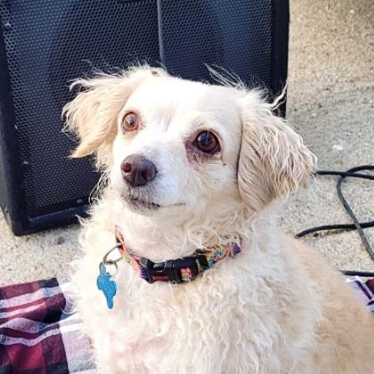 Sadie Rose cute dog
