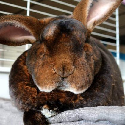 Treasure Trove Bunny saved pet