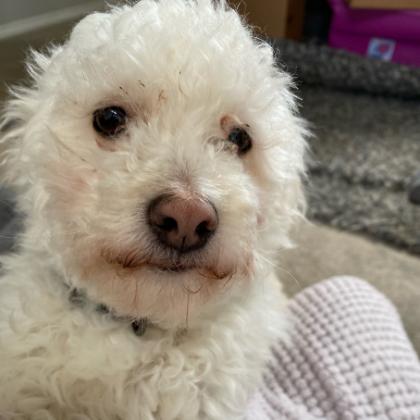 Roxy Saved Dog