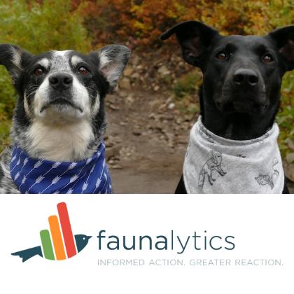 two adorable dogs wearing bandanas over a Faunalytics logo