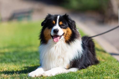 Dog Gunner